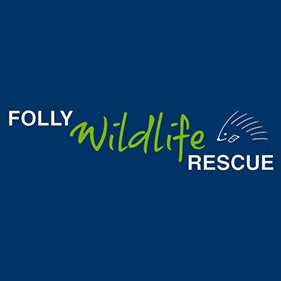 Folly Wildlife Rescue. From healthcare and advice to rescue and rehoming, animal welfare organisations are true heroes of the animal world.
