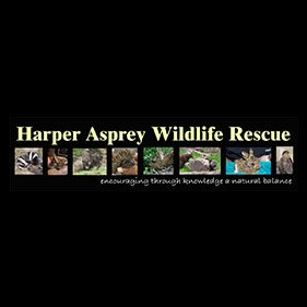 Harper Asprey Wildlife Centre. From healthcare and advice to rescue and rehoming, animal welfare organisations are true heroes of the animal world.