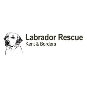 Labrador Recue. From healthcare and advice to rescue and rehoming, animal welfare organisations are true heroes of the animal world.