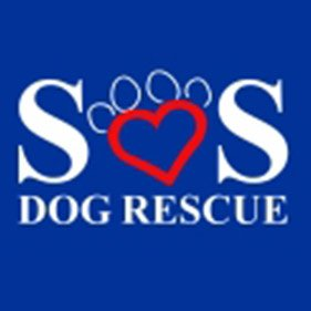 SOS Dog Rescue. From healthcare and advice to rescue and rehoming, animal welfare organisations are true heroes of the animal world.