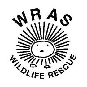WRAS. From healthcare and advice to rescue and rehoming, animal welfare organisations are true heroes of the animal world.