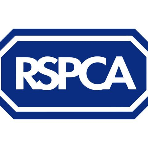 RSPCA. From healthcare and advice to rescue and rehoming, animal welfare organisations are true heroes of the animal world.