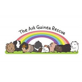 The Ark. From healthcare and advice to rescue and rehoming, animal welfare organisations are true heroes of the animal world.