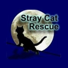 Stray Cat Rescue. From healthcare and advice to rescue and rehoming, animal welfare organisations are true heroes of the animal world.