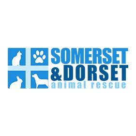 Somerset & dorset AR. From healthcare and advice to rescue and rehoming, animal welfare organisations are true heroes of the animal world.