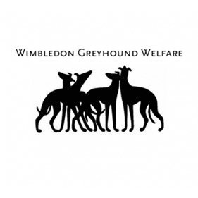 Greyhound Welfare. From healthcare and advice to rescue and rehoming, animal welfare organisations are true heroes of the animal world.