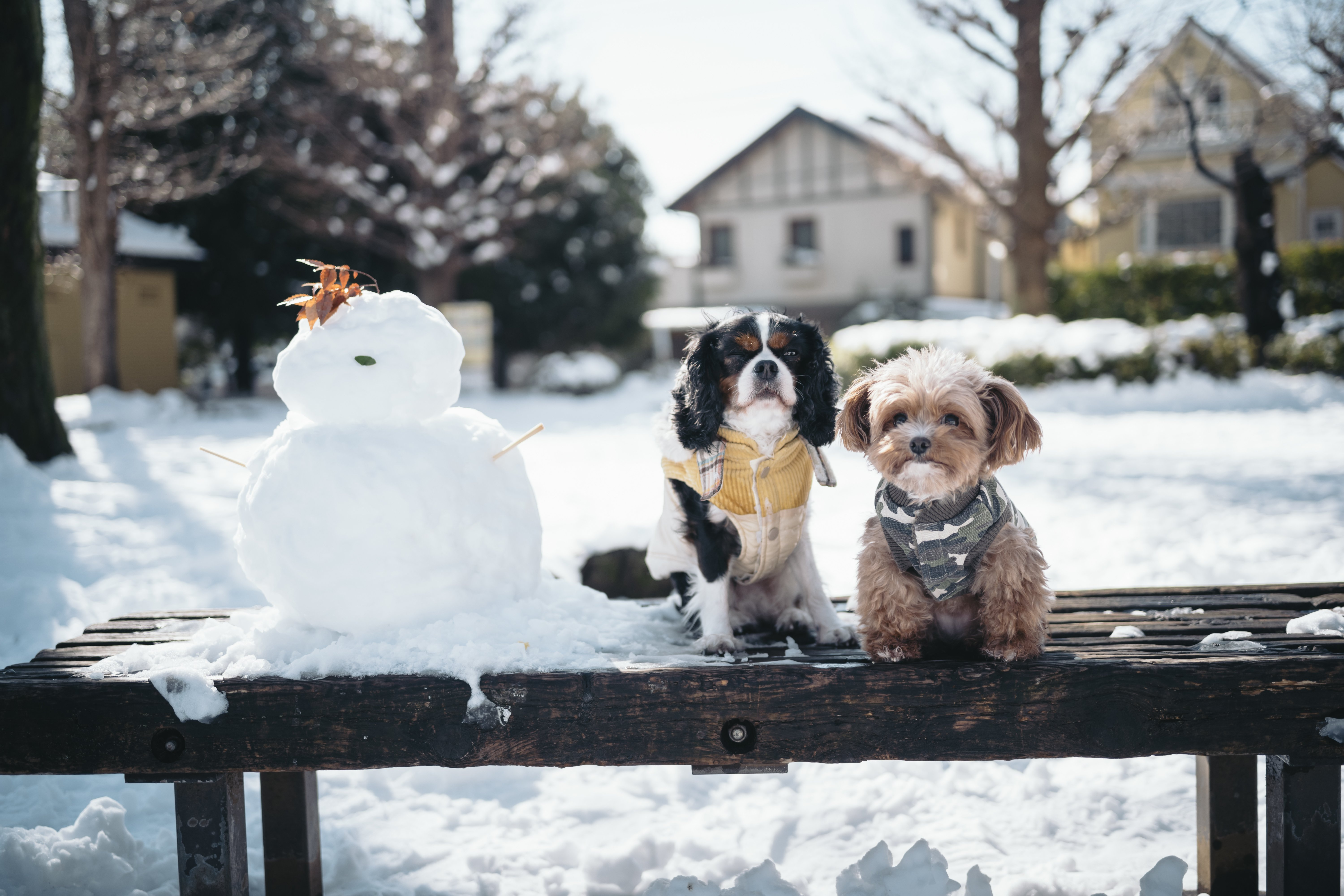Orders may take slightly longer to deliver due to the UK weather conditions February 2019 snowdogs ukweather, weatheralert snowmageddon2019