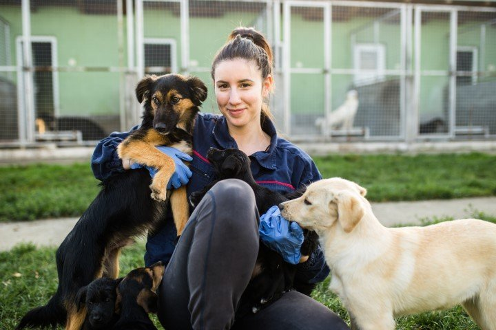 Smiling young woman in dog rescue shelter playing with dogs and choosing one to adopt