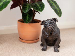 A cast resin urn in the shape of an English bulldog dog