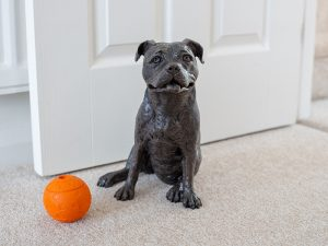 A resin figurine urn sculpted into the shape of a Staffordshire bull terrier dog sitting facing forwards. Finished in an antique bronze style.