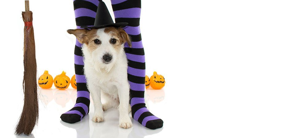 Some great Halloween costume ideas for dogs. Easy safe dog halloween costume tips