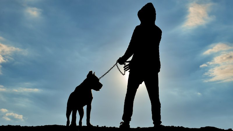 tips to keep your dogs safe from thieves
